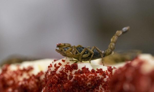 Сами на св. Валентин? Вземете си скорпион или хлебарка!