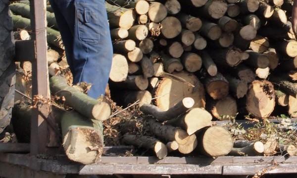 Обсъждат мораториум върху износа на дървен материал