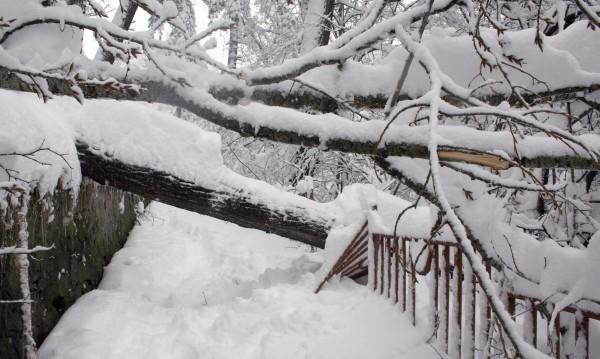 Снегът затвори училища в страната