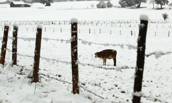 Снегът срути обор, стопанинът оцеля по чудо