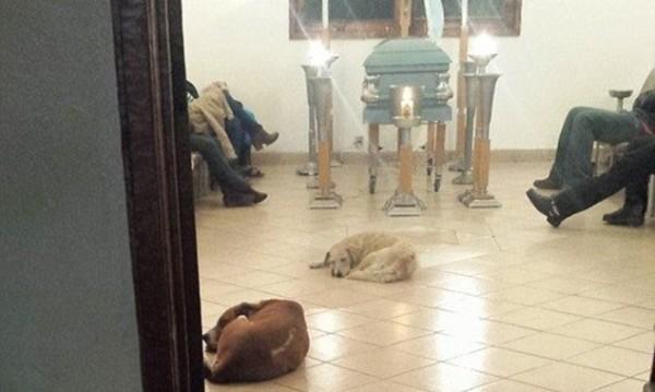 Поклон пред паметта й: Кучета почетоха покойница