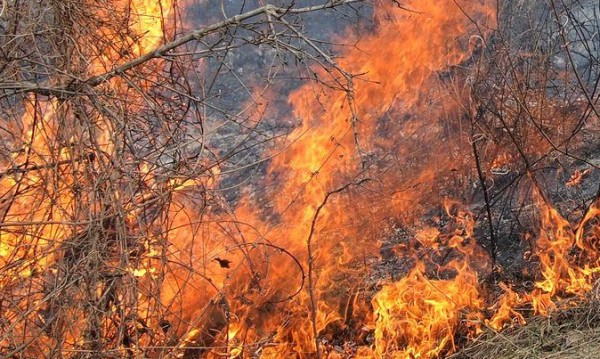 """Пожар обхвана 300 дка гора в """"Държавно горско стопанство""""-Струмяни"""