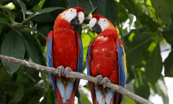 Папагали се спасиха от горяща къща с викове за помощ