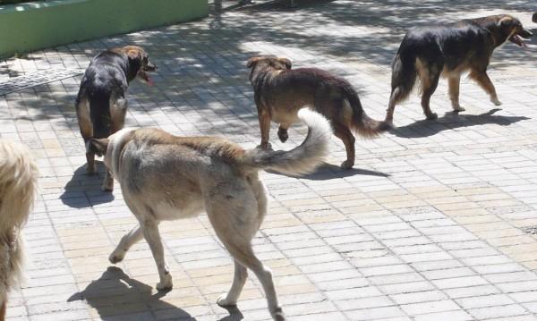 Кучета нахапаха две деца в Сливен