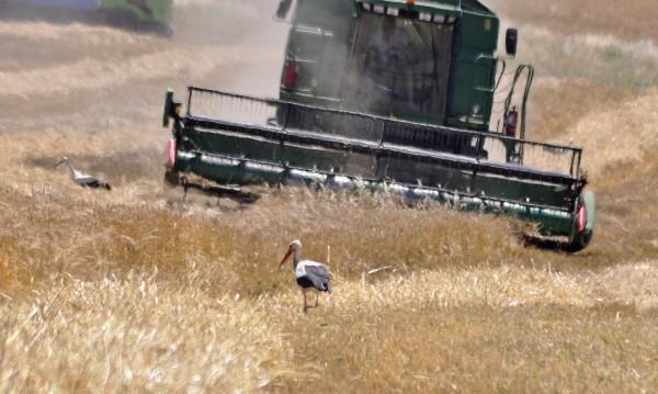 МЗХ обмисля да закрие Националната служба по зърното