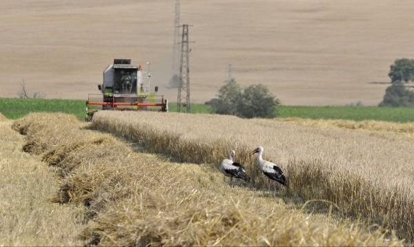 Земеделци изтърват срока за регистрация, глобяват ги