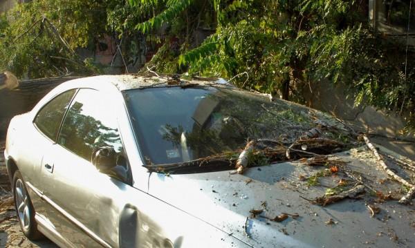 Топола падна върху автомобил, а вътре - дете