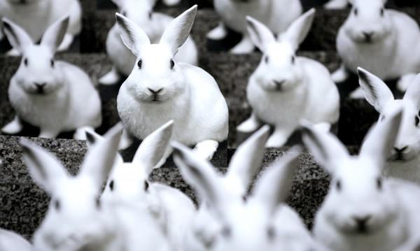 ЕК реши: Опитите с животни продължават