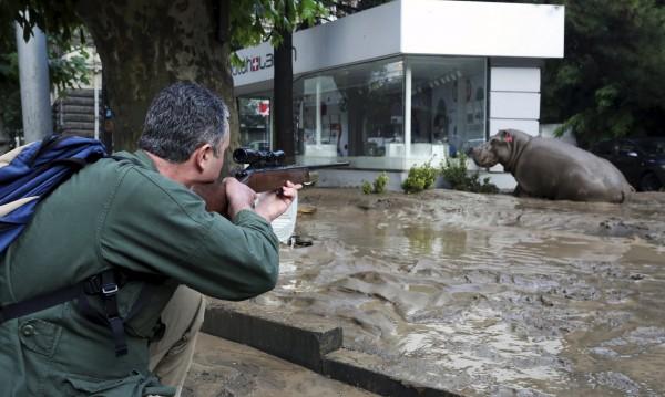 Избягали тигри, лъвове, мечки кръстостват Тбилиси