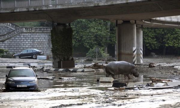 Изчезналите лъвове и тигри от наводнения зоопарк в Тбилиси са мъртви