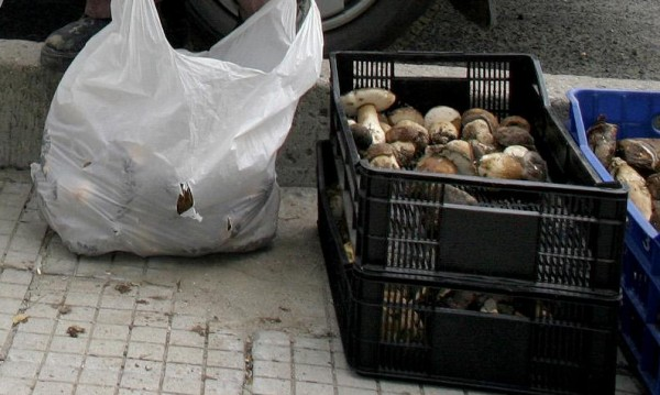 Гъбите в Смолянско подкараха след дъждовете