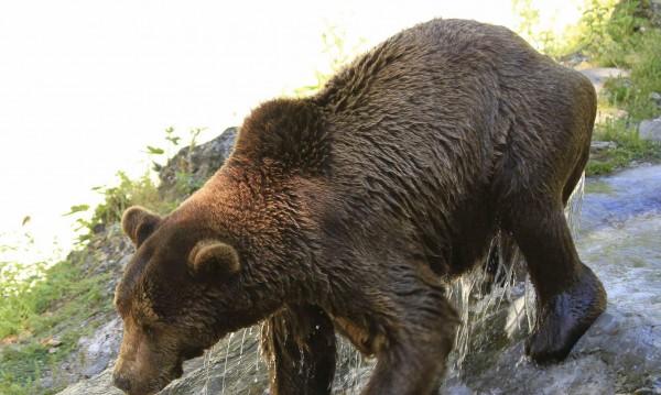 Най-сетне има асфалтиран път до мечките в Белица