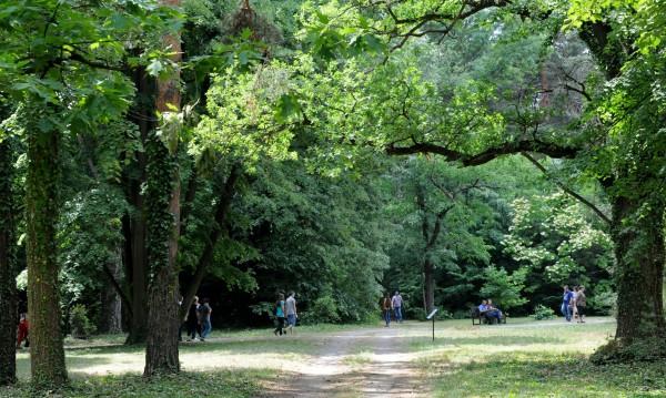 Премахват опасни дървета от Борисовата градина