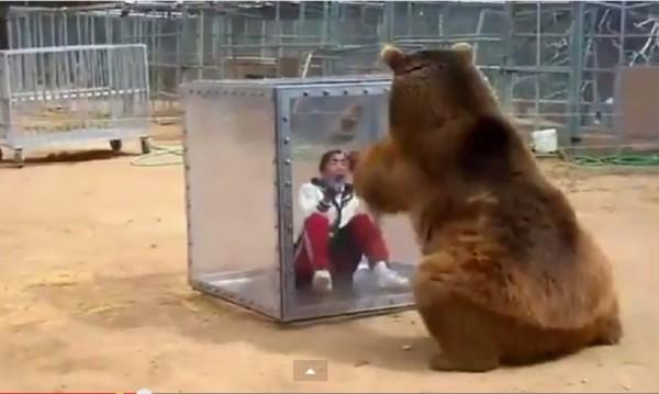 Японка пищи, мечка реве! Шантава работа!
