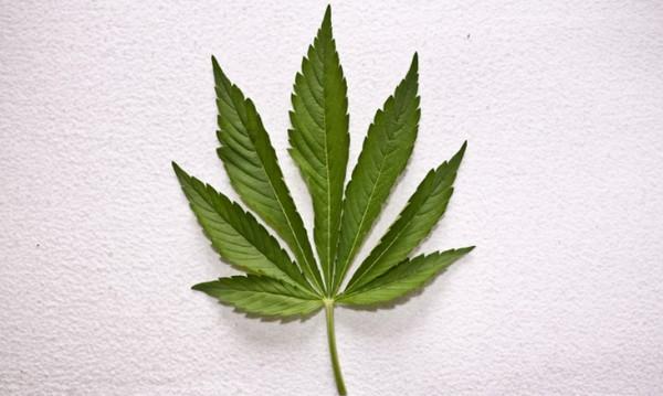 Знаете ли, че Джордж Вашингтон е отглеждал марихуана?