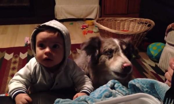 """Гладно куче, умно куче! Иска си храна с... """"мама""""!"""