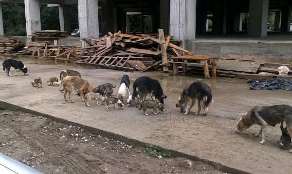 Бездомните псета намаляват, уличните котки – не