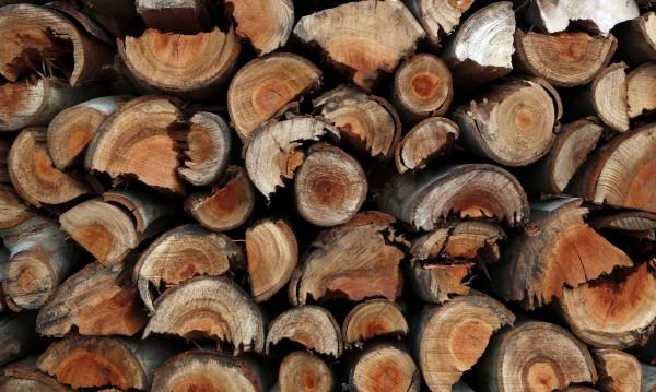 Роми плашили горски служители, не си дават дървата