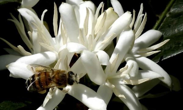 """""""Работливите пчелички"""" си искат дневната доза кофеин"""