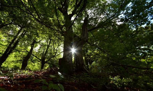 Вековните ни гори в Балкана – Кандидати за ЮНЕСКО