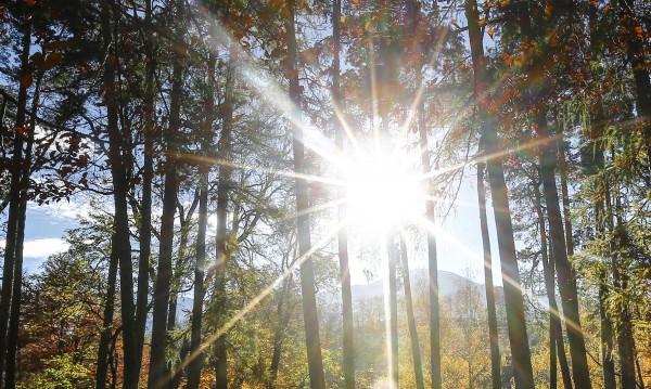 Топъл януарски ден, слънчево и до 16°