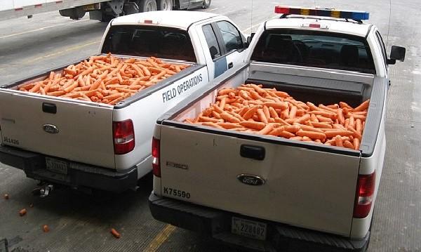 Моркови за здраве! Или пък за весел живот?