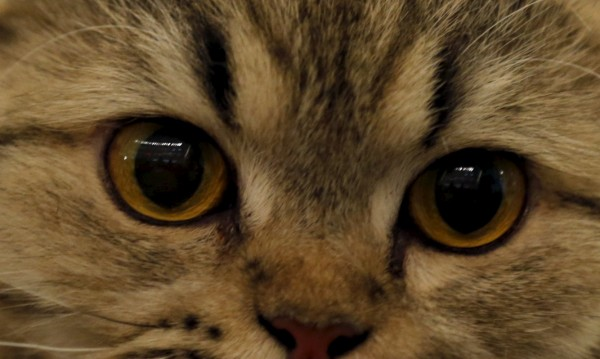 След 1000 години ще сме с котешки очи