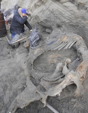 Хора са живели в Арктика преди 45 000 години