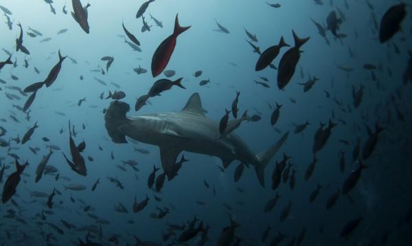 През 2050 г.: Повече пластмаса, отколкото риба в океаните