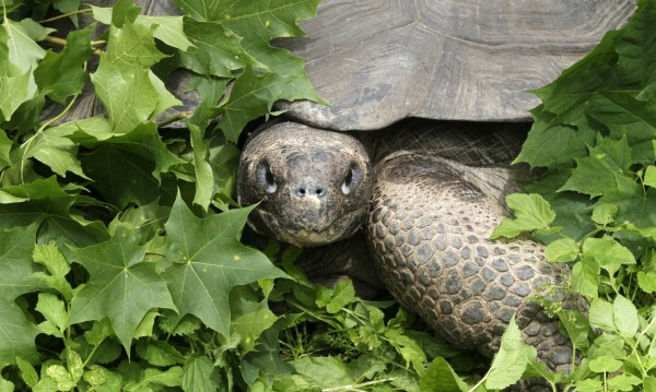 Костенурка на 183 г. – най-старото животно в света