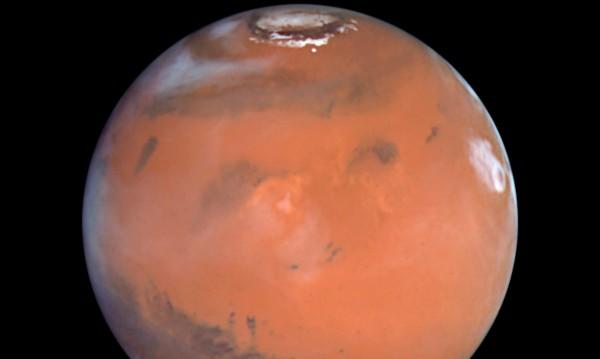 Скални гъби от Антарктика оцеляха в марсиански условия