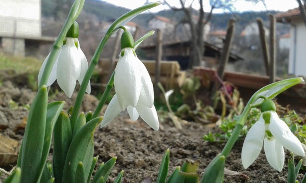 Малък сечко - пролет, зима, пролет, зима…