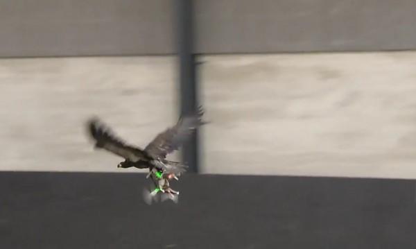 Ще ми летиш, а? Орли погнаха дронове!