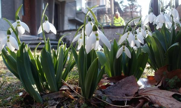 Пролет в Ловеч. Температурата достигна 22,3°С