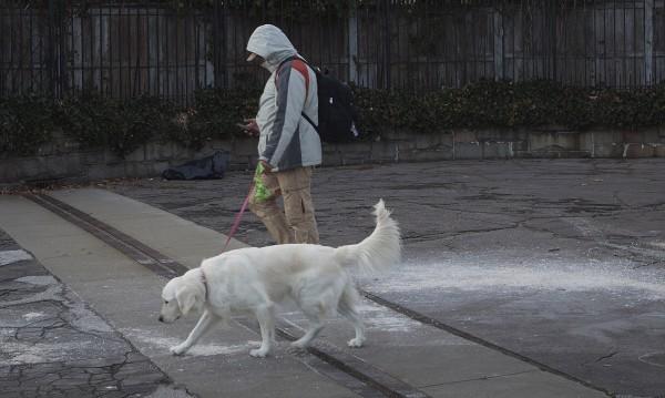 НС развърза кучетата: Без каишки, без глоба...