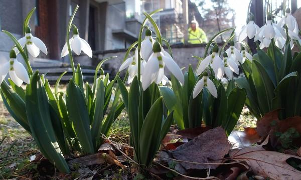 Облачно, но твърде топло за февруари и днес
