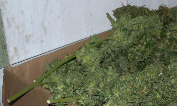 Опасна марихуана отключва силна агресия