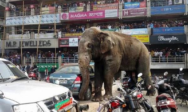 Разярен слон унищожи над 100 къщи в Индия