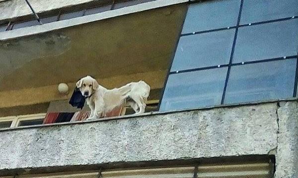 Акция: Да спасим куче-скелет от стопаните му