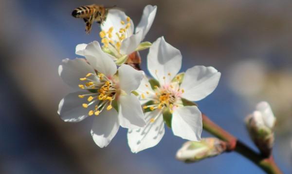 Пролетното време ще ни топли и утре