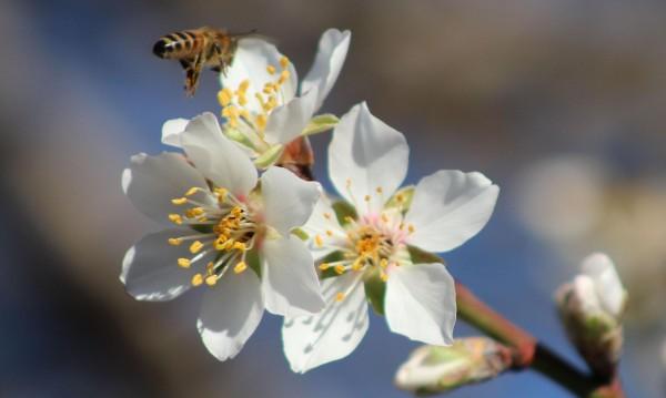Февруарската пролет свършва, градусите падат