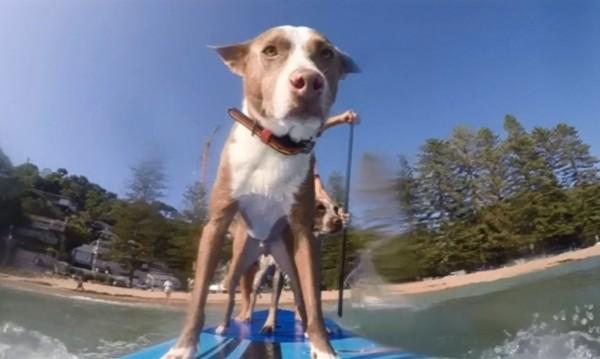 Куче на сърф? Възможно е!