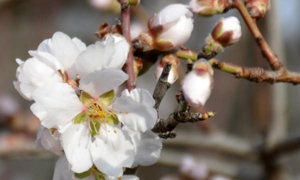 Очаква ни топъл пролетен вторник