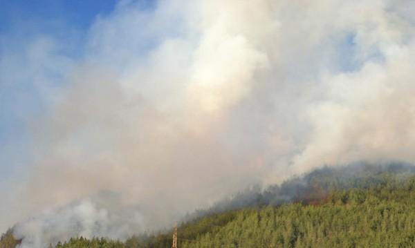 Пожар бушува в защитена местност край Тутракан