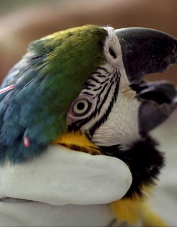 Какви са рисковете за здравето от птица като домашен любимец?