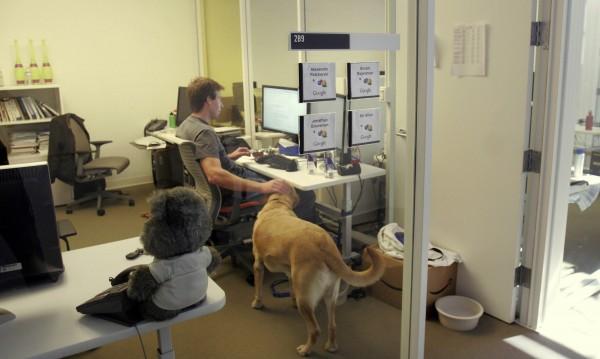 Вземете кучето в офиса – намалява стреса!