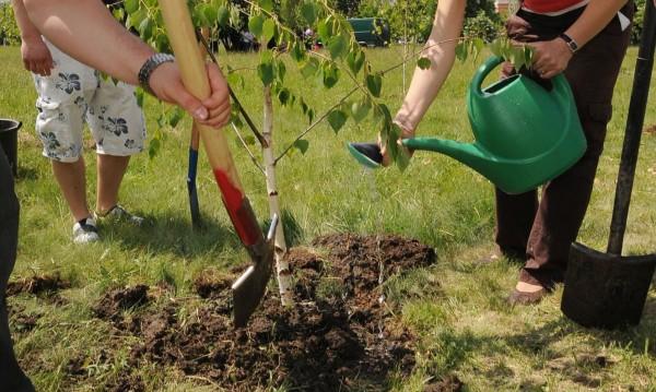 600 нови дървета ще зеленеят по столичните улици