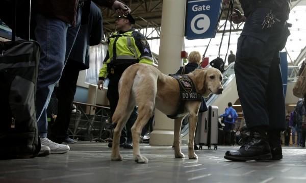 Кучешки патрули да пазят гарите от бомби