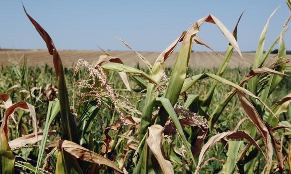 Код червено за лятото: Невиждани жеги и суша