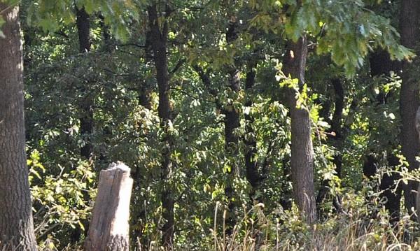 Спипаха горски да бракониерства в Сливенско